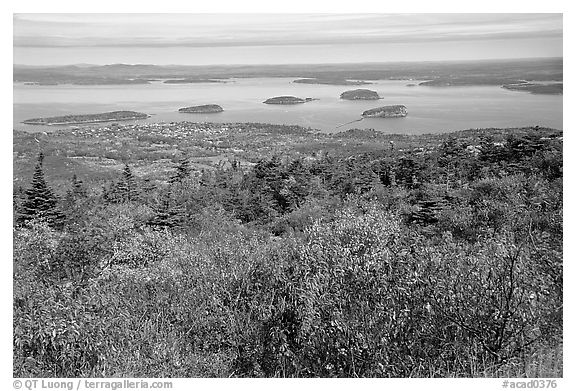 Shrubs and Frenchman Bay from Cadillac mountain. Acadia National Park (black and white)