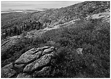 Shrubs in autumn color and granite slabs on Cadillac mountain. Acadia National Park, Maine, USA. (black and white)