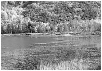 Pond and autumn colors. Acadia National Park, Maine, USA. (black and white)