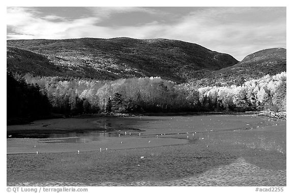 Otter Cove at low tide looking at Cadillac Mountain and Dorr Mountain. Acadia National Park (black and white)