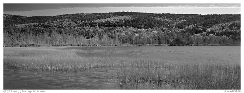 Marsh and hill in autumn foliage. Acadia National Park (black and white)