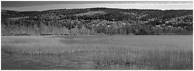 Marsh and hill in autumn foliage. Acadia National Park (Panoramic black and white)