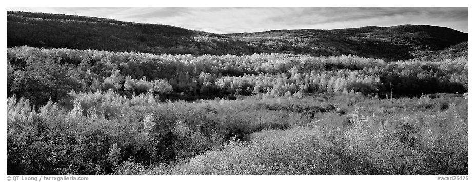Forest landscape in the fall. Acadia National Park (black and white)