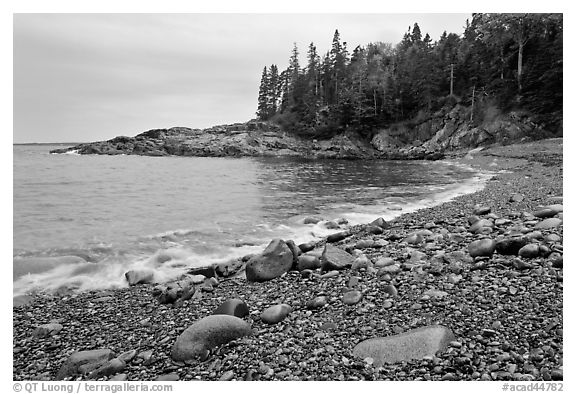 Hunters cove in rainy weather. Acadia National Park (black and white)