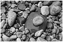 Colorful pebbles shining in the rain. Acadia National Park, Maine, USA. (black and white)