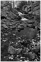 Stream in autumn. Acadia National Park, Maine, USA. (black and white)