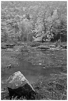 Pond in the rain with trees in fall foliage. Acadia National Park ( black and white)