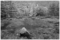 Pond in rainy weather and trees in autumn foliage. Acadia National Park ( black and white)