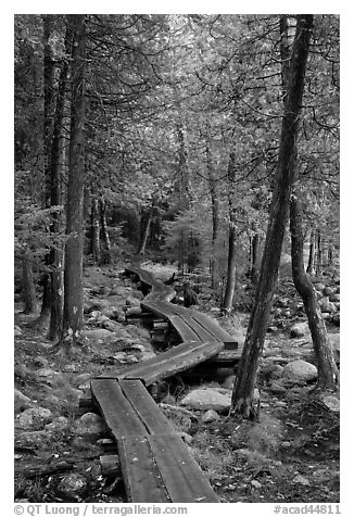 Boardwalk in forest. Acadia National Park (black and white)
