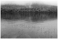 Reeds, hillside in autumn foliage, and fog, Jordan Pond. Acadia National Park, Maine, USA. (black and white)