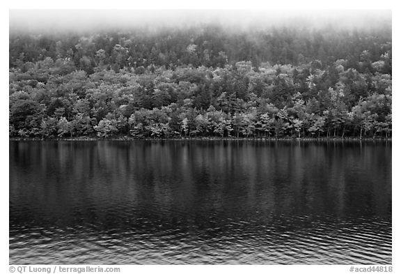 Trees in fall colors reflected in Jordan Pond. Acadia National Park (black and white)