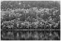 Hillside with trees in autumn colors and pond reflections. Acadia National Park ( black and white)