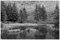 Pond and pine trees. Acadia National Park ( black and white)