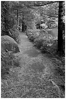 Trail in the fall on the shore of Jordan Pond. Acadia National Park, Maine, USA. (black and white)