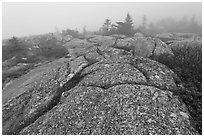 Lichen-covered slabs in the heavy mist, Mount Cadillac. Acadia National Park, Maine, USA. (black and white)
