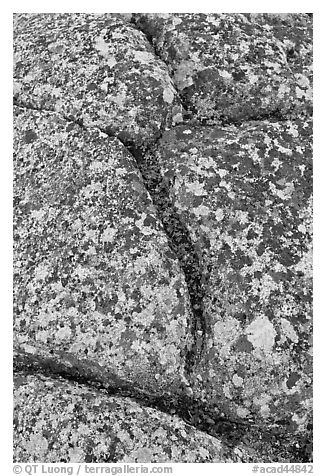 Granite slab with cracks and lichen, Mount Cadillac. Acadia National Park (black and white)
