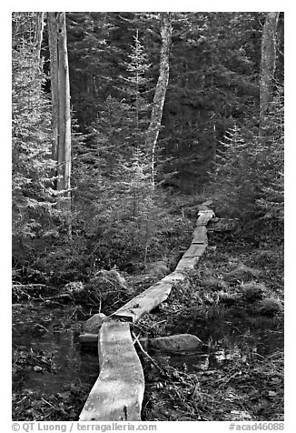 Boardwalk in forest, Isle Au Haut. Acadia National Park (black and white)