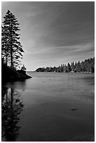 Tree reflected in calm waters, Duck Harbor, Isle Au Haut. Acadia National Park ( black and white)