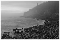 Otter cliff and cobblestones on misty morning. Acadia National Park ( black and white)
