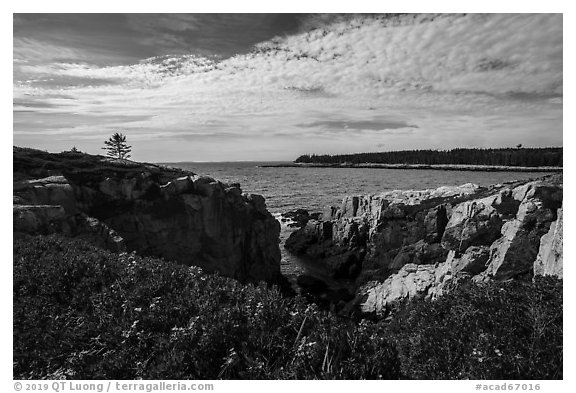 Wildflowers and Schoodic Point from Little Moose Island. Acadia National Park (black and white)