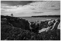 Wildflowers and Schoodic Point from Little Moose Island. Acadia National Park ( black and white)