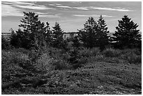 Autumn colors, Little Moose Island, Schoodic Peninsula. Acadia National Park ( black and white)