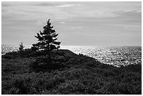 Autumn colors and shimmering sea, Little Moose Island. Acadia National Park ( black and white)