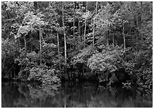 Trees reflected in pond in summer. Congaree National Park, South Carolina, USA. (black and white)