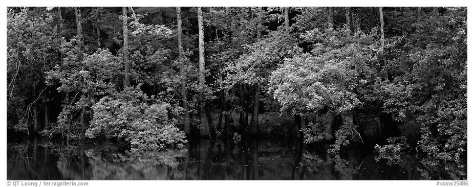 Summer green forest reflected in pond. Congaree National Park (black and white)