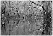 Cedar Creek with trees in autumn colors reflected. Congaree National Park ( black and white)