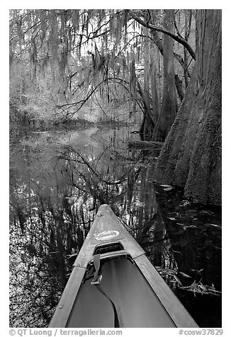 Canoe prow and swamp trees growing at the base of Cedar Creek. Congaree National Park (black and white)