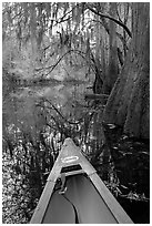 Canoe prow and swamp trees growing at the base of Cedar Creek. Congaree National Park, South Carolina, USA. (black and white)