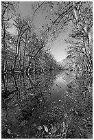 Wise Lake on a sunny day. Congaree National Park, South Carolina, USA. (black and white)