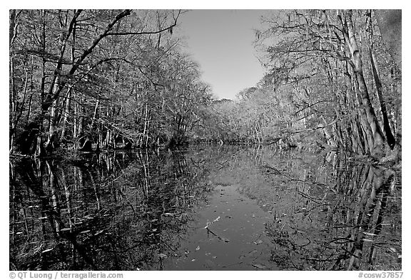 Wise Lake and reflections. Congaree National Park (black and white)