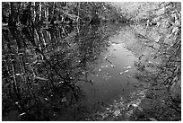 Fallen leaves and reflections in Wise Lake. Congaree National Park, South Carolina, USA. (black and white)