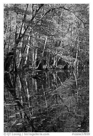 Trees and reflections, Wise Lake. Congaree National Park (black and white)