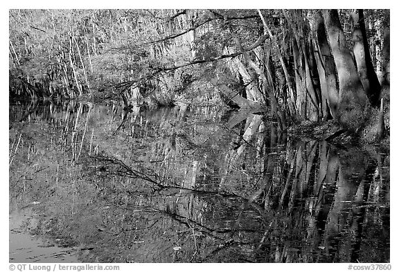 Reflections, Wise Lake. Congaree National Park (black and white)