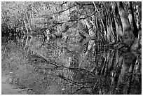 Reflections, Wise Lake. Congaree National Park, South Carolina, USA. (black and white)