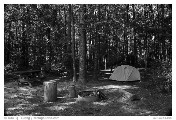 Longleaf Campground. Congaree National Park (black and white)