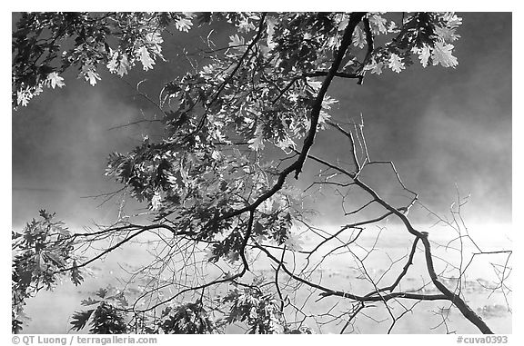 Branches, leaves, and mist, Kendall Lake. Cuyahoga Valley National Park (black and white)