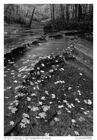 Fallen leaves and cascades near Bridalveil falls. Cuyahoga Valley National Park (black and white)