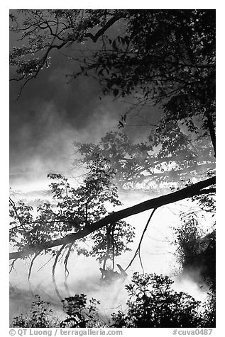 Fallen tree and mist, Kendal lake. Cuyahoga Valley National Park (black and white)