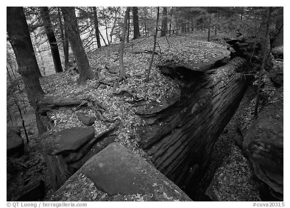Sandstone cracks, moss, fallen leaves, and trees with bare roots. Cuyahoga Valley National Park (black and white)