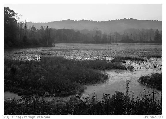 Grasses and Beaver Marsh at sunrise. Cuyahoga Valley National Park (black and white)