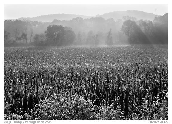 Field with sun and trees throught morning mist. Cuyahoga Valley National Park (black and white)