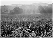 Field with sun and trees throught morning mist. Cuyahoga Valley National Park, Ohio, USA. (black and white)