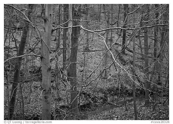 Branches and bare forest. Cuyahoga Valley National Park (black and white)