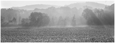 Sunrays in distant mist above field. Cuyahoga Valley National Park (Panoramic black and white)