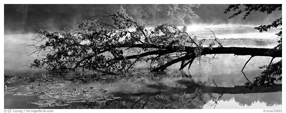 Fallen tree in lake with mist raising. Cuyahoga Valley National Park (black and white)