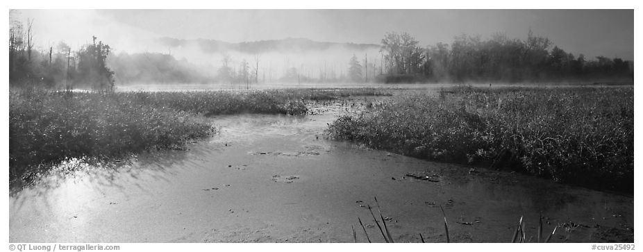 Misty marsh scenery, early morning. Cuyahoga Valley National Park (black and white)